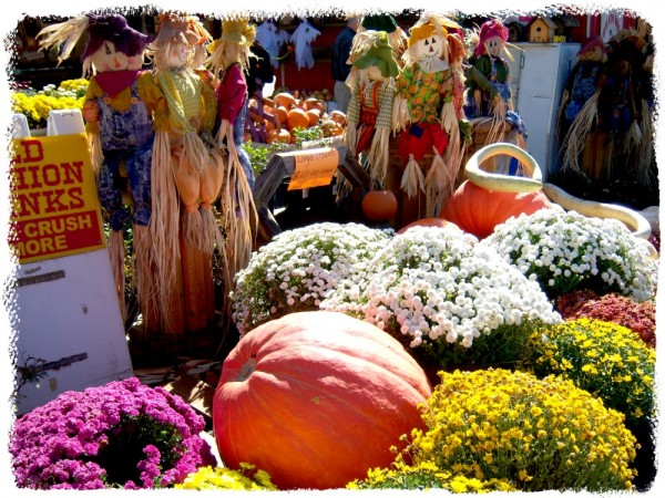 Photography Challenge Fall/Suzys Artsy Craftsy Sitcom #fall #pumpkin