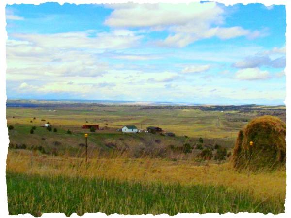 Montana Fields/Suzys Artsy Craftsy Sitcom #photography challenge