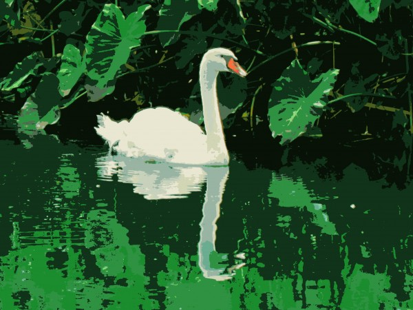 Swan posterized/Suzys Artsy Craftsy Sitcom #photography challenge