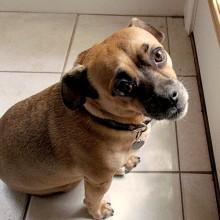 ralph dog looking sad