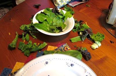 dog ate my salad