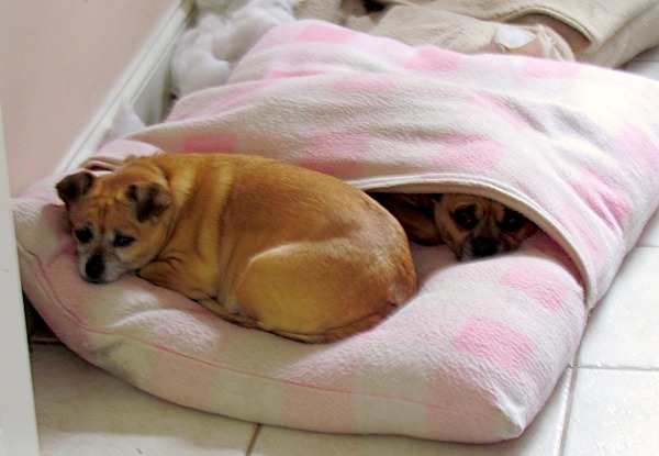 dogs in envelope bed