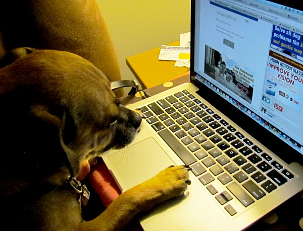 dog typing at the computer