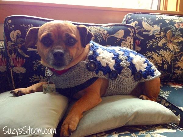 ralph in a sweater