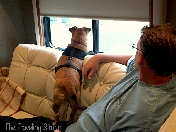 14 tips for traveling with your pet