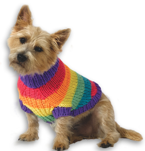 rainbow knitted dog sweater